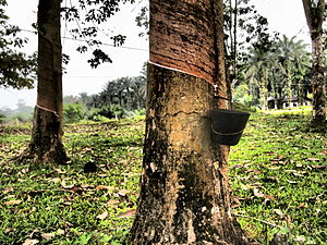 Automotive industry in Malaysia - Rubber plantation
