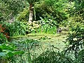 Pond, Trengwainton Garden - geograph.org.uk - 236478.jpg