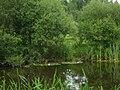 Pond of Uhtna - panoramio.jpg