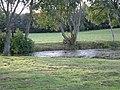 Pool with Moorhens - geograph.org.uk - 259881.jpg