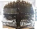 Portimao - House of Manuel Teixeira Gomes - Tree composite (25203392521).jpg