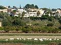 Portugal - Algarve - Montes de Alvor - flamingos (25227002753).jpg