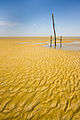 Praia de Cajuuna Texturas Ilha de Marajo 2.jpg