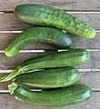 Première récolte de concombre et courgettes le 21 juin 2020.jpg