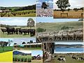 Productions Agricoles Australie.jpg