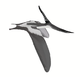 Pteranodon longiceps mmartyniuk wiki.png