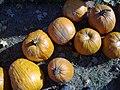 Pumpkins, Irons Fruit Farm.jpg