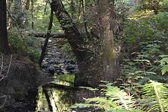 Purisima Creek (San Mateo County) - Another view of the creek