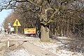 Quercus robur pomnik przyrody Słupno - panoramio.jpg