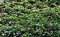 RégénérationNaturelleForest2.jpg