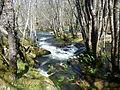 Río Parga cerca de Guitiriz (Lugo, Galicia, España) 02.JPG