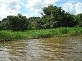 REPRESA - Cosmópolis - SP - panoramio (14).jpg