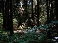 REZERWAT PRZYRODY Olbina 03 - panoramio.jpg