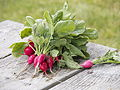 Radishes fresh from the garden.jpg