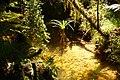 Rain forest near Monroe Beach - panoramio.jpg