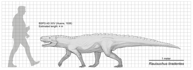 File:Raiusuchus scale diagram.png