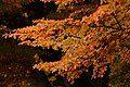 Rama de árbol de magallanes.jpg