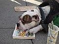Reading Dog (26948677).jpeg