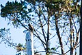 Red-tailed hawk (38307956285).jpg