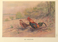 Red Junglefowl by George Edward Lodge.png