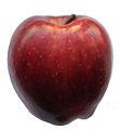 Red apple on white background.jpg