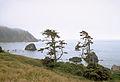 Redwood National Park REDW9339.jpg