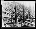 Result of hurricane and fire in a heavy stand of Idaho white pine on Little North fork of St. Joe River, Coeur d'Alene, Idaho LCCN90715255.jpg