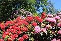 Rhododendronpark Bremen 20090513 119.JPG