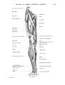 Richer - Anatomie artistique, 2 p. 75.png