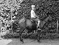 Rider, boy, horse Fortepan 12554.jpg