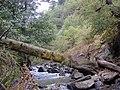 River in Georgia (2).jpg