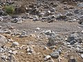 Riverbed in Wadi al Khaynagh (5 of 10).JPG