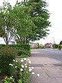 Ruskin Avenue - geograph.org.uk - 172126.jpg