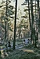 San Ildefonso, monte 1974 10.jpg