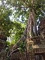 Sangkat Nokor Thum, Krong Siem Reap, Cambodia - panoramio (54).jpg