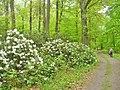 Schlosspark Wiesenburg (Wiesenburg Palace Park) - geo.hlipp.de - 36430.jpg