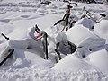 Schnee im März 048.jpg