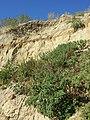 Schottergrube nordwestlich von Asparn an der Zaya sl10.jpg
