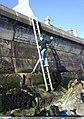 Sea Wall Deveronside - geograph.org.uk - 1471181.jpg