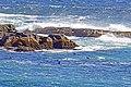Seals Playing (23237759254).jpg