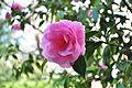 Seattle - Parsons Gardens 16.jpg