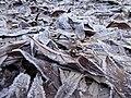 Segonzano, loc Paludi - Brina sulle foglie 02.jpg
