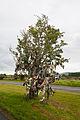 Seir Kieran St. Ciaran's Bush 2010 09 09.jpg