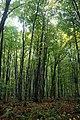 Seney National Wildlife Refuge (15274282149).jpg