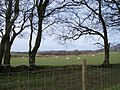 Sheep pastures at Orsedd Fawr Farm - geograph.org.uk - 1777548.jpg
