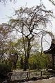 Shojiji Kyoto Japan03s3s4592.jpg