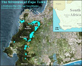 Silvertree Distribution Map - Leucadendron argenteum - Cape Town.png