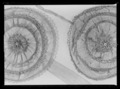 Skoros - Livrustkammaren - 10529.tif
