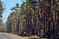 Skulyn Kovelskyi Volynska-Lisova dacha nature reserve-view with guard board.jpg