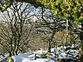Snow fall in Wistman's Wood - geograph.org.uk - 1638202.jpg